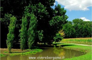 Riserva naturale FontanileBrancaleonecaravaggiobergamo1438819371