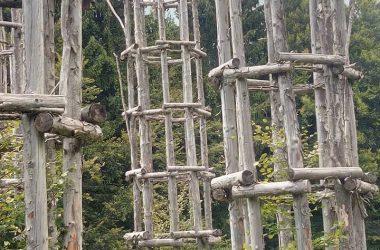 Immagini Cattedrale Vegetale Oltre il Colle
