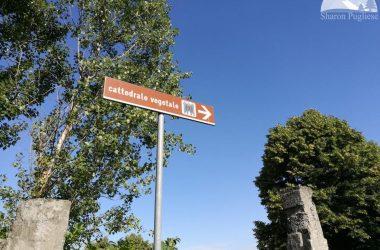 Visitare Bergamo Cattedrale Vegetale Oltre il Colle