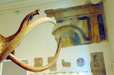 Bergamo Museo Civico di Scienze Naturali Enrico Caffi