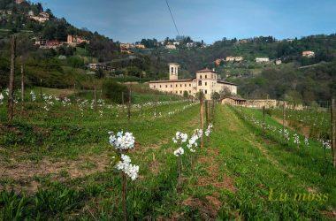 Ciliegi ex-refettorio del monastero di Astino - Bergamo