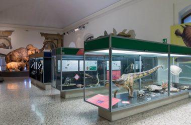 Dinosauri al Museo Civico di Scienze Naturali di Bergamo