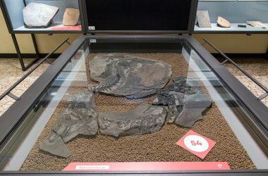 Fossili Museo di Scienze Naturali di Bergamo nasce nel 1871