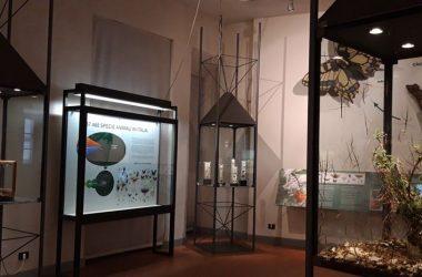 Il Museo Civico di Scienze Naturali di Bergamo
