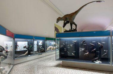 Museo Civico Scienze Naturali di Bergamo
