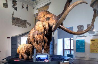 Museo Civico di Scienze Naturali a Bergamo
