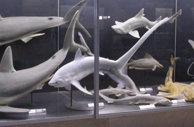 Museo Civico di Scienze bergamo