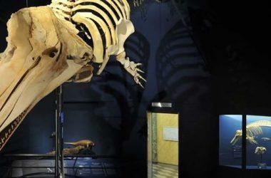 Museo di Scienze Naturali - E.Caffi